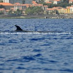 Desertinho Atlantic Whale observations: Bryde's whale