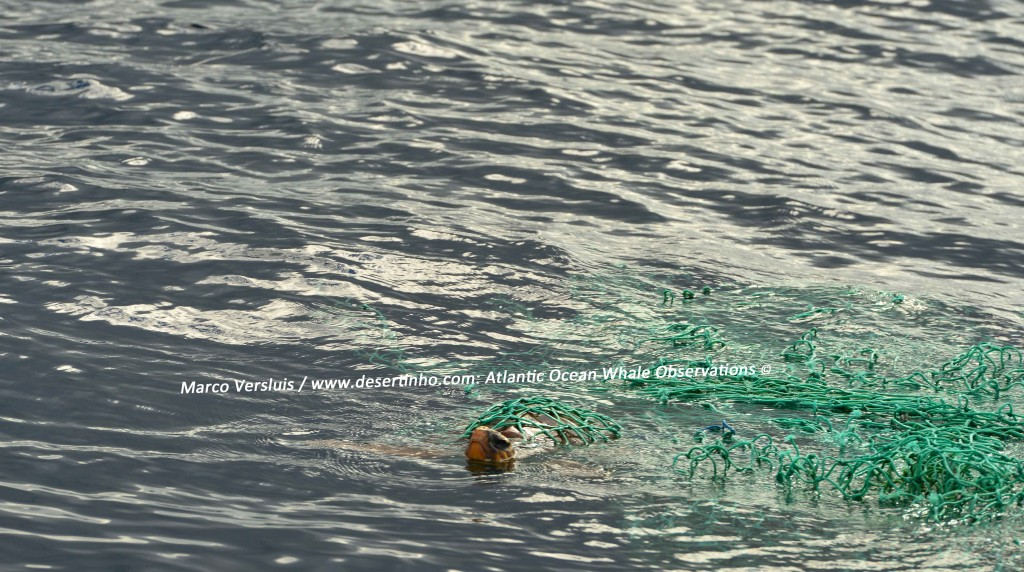Desertinho Atlantic Whale observations: Loggerhead-Sea-Turtle driftnets cargo net