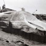 Desertinho Atlantic Whale observations: Whale Rescue protocol - Walvis Redding protocol