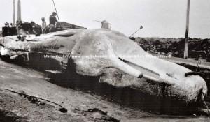 Whale Rescue protocol - Walvis Redding protocol.