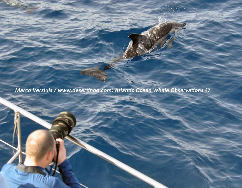 esertinho Atlantic whale observations: Marco Versluis