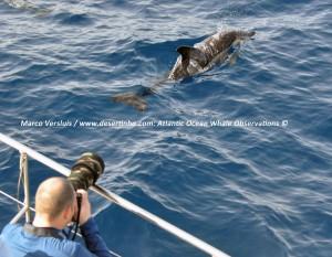 Desertinho Atlantic Ocean - Marco Versluis