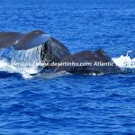 Desertinho Atlantic Whale observations: Sperm whale mother and calf