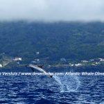 Desertinho Atlantic Whale observations: Atlantic Striped dolphin